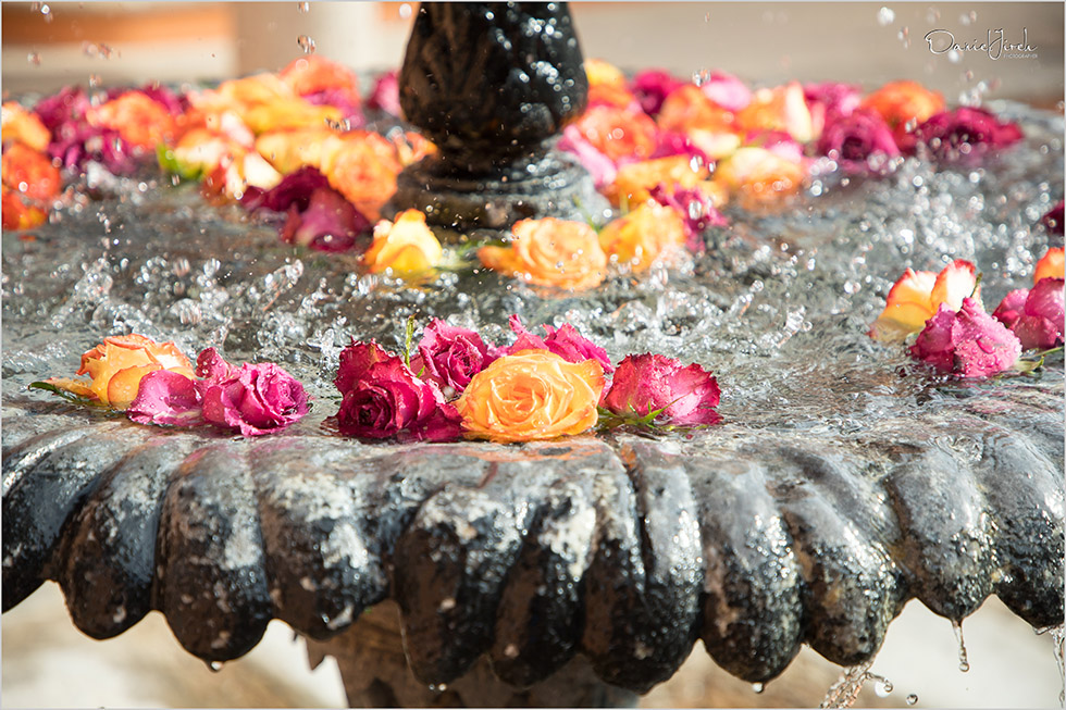 flowers in water fountain at Villa Vista Ballena